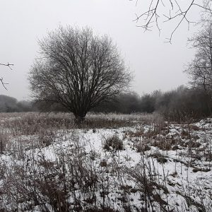 Wigan-Flashes-in-the-Snow